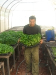 Produccion de plantin de hortalizas
