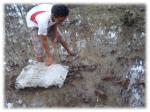 Recientemente fueron liberados 500 docenas de punches en el sector del canal Izcanal, como parte de las acciones de protección de esta especie.