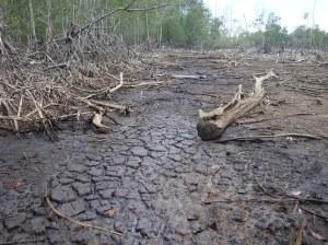Área conocida como El Quemado, donde se observa la gravedad de la pérdida del ecosistema manglar