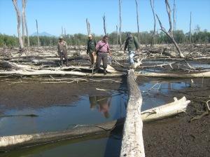 Actores locales inspeccionan el área y analizan las posibles acciones para la recuperación del ecosistema de manglar