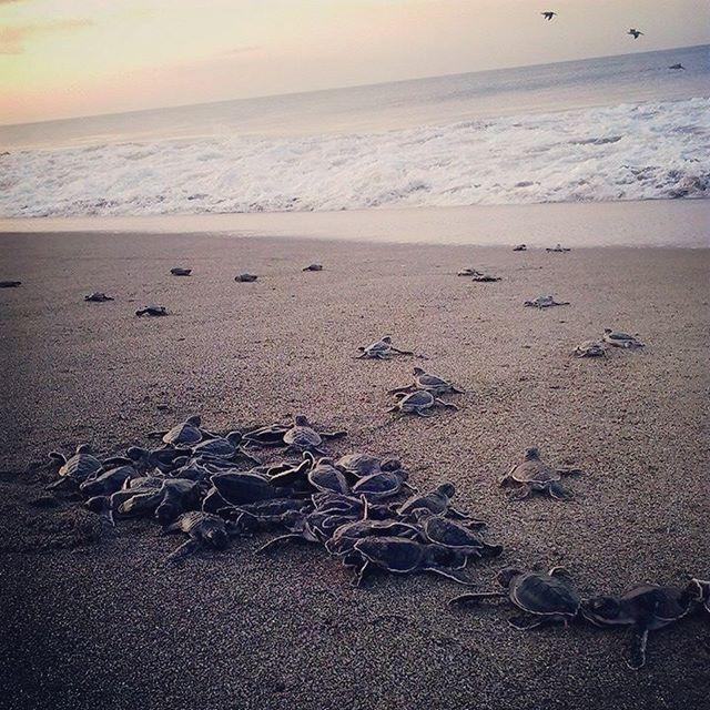 Tortugas Marinas atardecer Montecristo