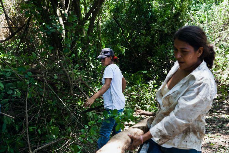 Mujeres participan en técnica comunitaria de Restauración Ecológica de Manglares (REM)